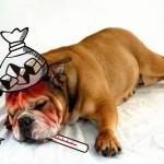 犬もインフルエンザになる?