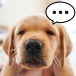 叱り方で犬が反抗的になる?