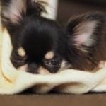 犬の皮膚トラブルを防ぐ乾燥対策