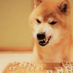 犬関係で起こるトラブル、どう対処するのが正解?