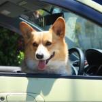 犬が車酔いするときは?