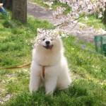 引っ越しなどによる環境変化と犬のストレス