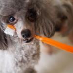 愛犬と口臭